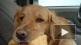 Владельцы отравленных в Сертолово собак сфотографировали ...