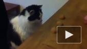 Кот играет в наперстки