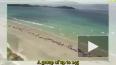 На берег в Новой Зеландии выбросились 145 дельфинов, ...