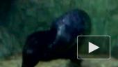 Влюбленные тюлени