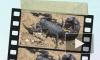 Иранские ученые изобрели лекарство от рака из яда скорпиона