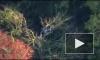 В сети опубликовано видео с места крушения самолета в Канаде