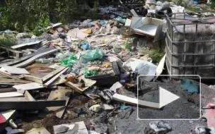 Экологи обнаружили в Невском районе Петербурга свалку химикатов