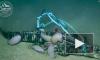 Видео: огромные ракообразные съели аллигатора