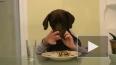 Забавное видео студентки из Техаса: утро собаки с ...