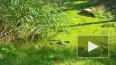 В Приморском районе петербуржцы нашли черепаху в грязной...