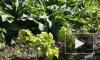 Питомник на вашем садовом участке