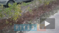 Активисты посадили во дворе своего дома 70 зеленых ...