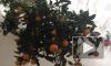В Петербург из Аргентины пытались провезти мандарины-убийцы