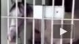 В Бразилии лошадь угодила в тюрьму за порчу авто