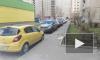В Петербурге судят живодера-алкаша, который выкинул белого шпица соседки из окна