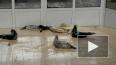 С жителями Петербурга поделились видео отдыхающих ...