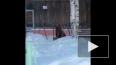 В сети появилось видео, как медвежонок качался на ...
