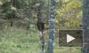 В Тосненском районе обнаружен тайник с оружием