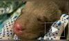 В Гатчине петербуржцы нашли слепого медвежонка Машеньку
