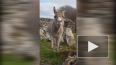 Видео с осликом, поющим как оперный певец, стало вирусны...