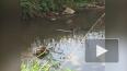Видео: в парке Сосновка завелись новые обитатели пруда