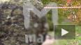 Первые подробности и видео: В Подмосковье убита следоват ...