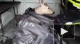 В сети появилось видео, как кыштымские спасатели вернули...