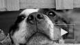 Смольный отчитался о кастрации 23 тысяч бездомных собак