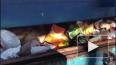 Видео: в Петербурге уничтожили более 300 килограммов ...