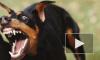 Петербурженка накормила своего пса гениталиями мужа, отрезав их ножом. Мужчина скончался