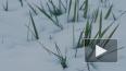 Гидрометцентр предупредил о похолодании и снеге