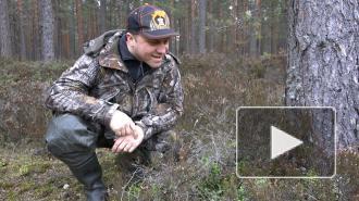 Интервью с биологом-натуралистом Павлом Глазковым: главные правила похода в лес под Петербургом