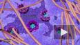 Ученые показали невероятное видео жизни ДНК