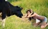Под Петербургом прошел конкурс красоты среди коров, телки красиво мычали