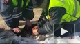 В Королёве полицейские спасли жизнь истерзанной собаки