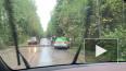 На автодорогу в Зеленогорске рухнуло дерево