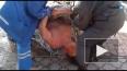 В Калининграде разъяренный нудист откусил палец у ...