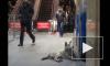 Бродячие собаки спасаются от морозов в петербургском метро