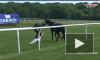 Видео: журналистка смогла остановить коня на скаку отделавшись одним ударом