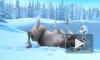 """Мультфильм """"Холодное сердце"""" (2013) от студии Walt Disney уступил лидерство в России"""