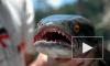 В США найдена рыба, способная жить даже без воды