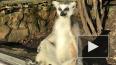 В Ленинградском зоопарке показали фотографии с загорающими ...