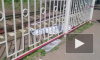"""Смертельное видео из Петербурга: на """"Старой Деревне"""" электричка сбила мужчину"""