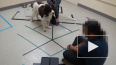 Собаки подчиняются командам человекоподобных роботов