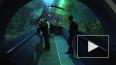 В Кронштадте появятся океанариум и интерактивный музей