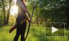 В России разрешили охотиться с луком и арбалетом
