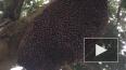 Устрашающее видео: Пчелиный рой делает пульсирующие ...