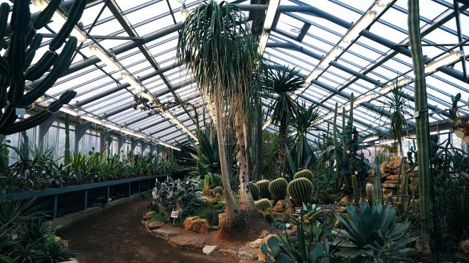 Городские открытия: Ботанический сад времён блокады