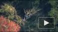 В сети опубликовано видео с места крушения самолета ...