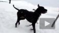 Власти Петербурга не пустят детей гулять с собаками