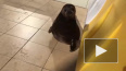 Новое видео с Крошиком порадовало жителей Петербурга