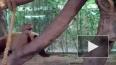 Беспалевная панда))) Полная версия)