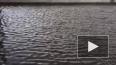 Расплескалась синева: Река Смоленка вышла из берегов