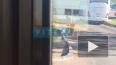 Молодой человек в Шушарах помог утке с утятами перейти ...